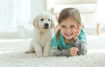 Blog How Often Should You Clean Your Carpets with Pets Resized